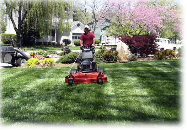Lewis Lawn Mower Service - Welcome